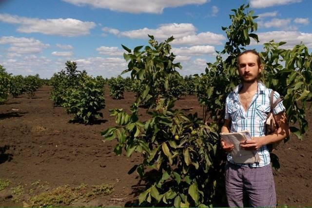 Грецкий орех в подмосковье выращивание