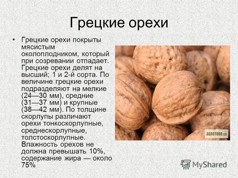 Чем подкормить грецкий орех весной, летом, осенью