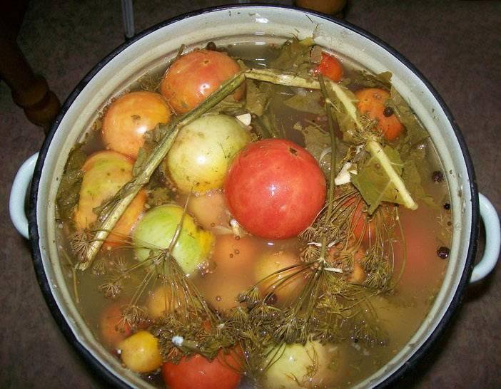 Засолка зеленых помидоров на зиму холодным способом в ведре – 5 рецептов с фото пошагово