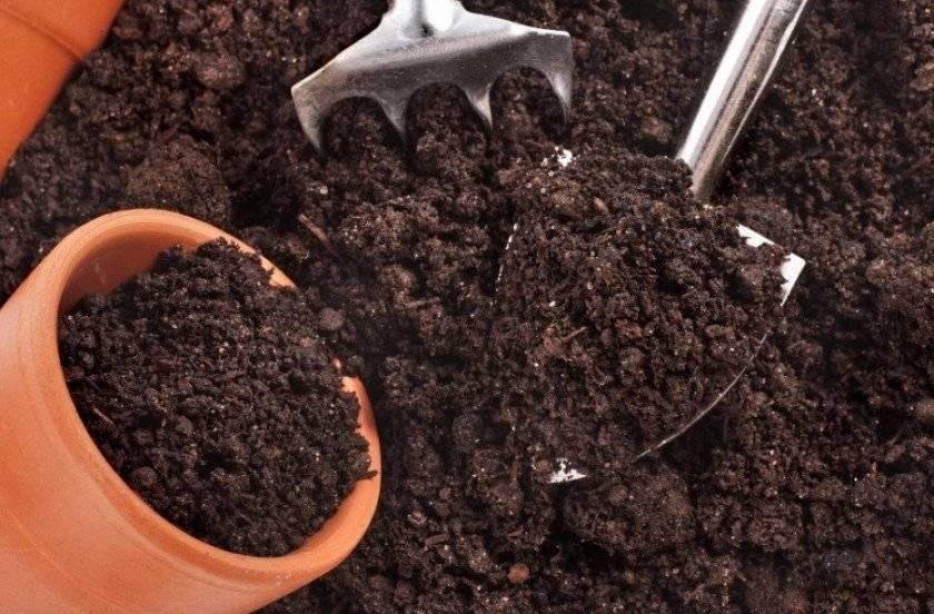 Лучшие сидераты для обогащения почвы