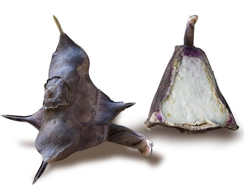 Макадамия — самый дорогой орех родом из австралии