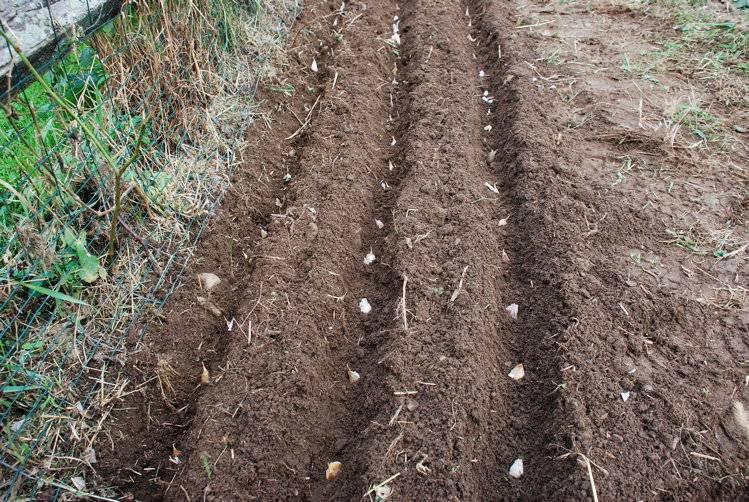 Как вырастить земляной орех арахис на грядке, в теплице, на подоконнике