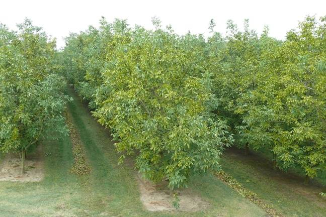 Технология выращивания органического сада от экспертов куб гау — agroxxi