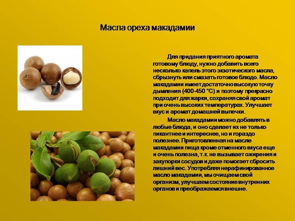 Макадамия — все, что нужно знать о короле орехов