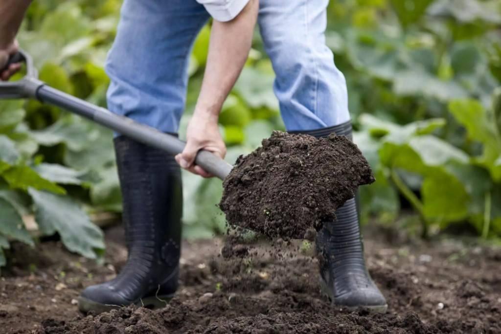 Выращивание арахиса на огороде: актуальная информация