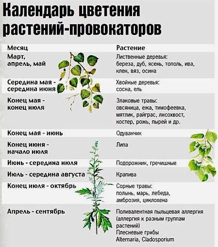 Какие орехи не аллергенные - симптомы и лечение болезней