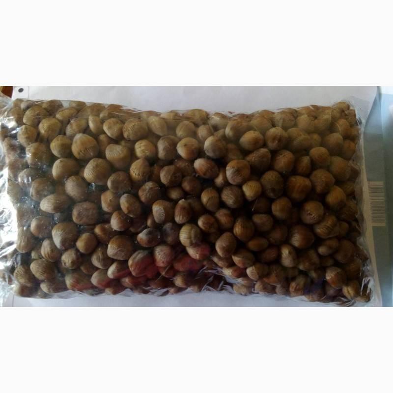 Медвежий орех (лещина древовидная): польза и вред, применение и выращивание