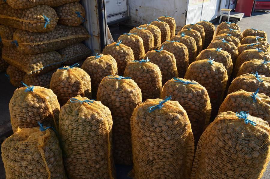 Промышленные сорта фундука для климатических условий украины — портал ореховод
