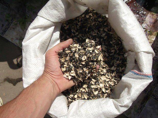 Особенности использования шелухи от семечек как удобрения