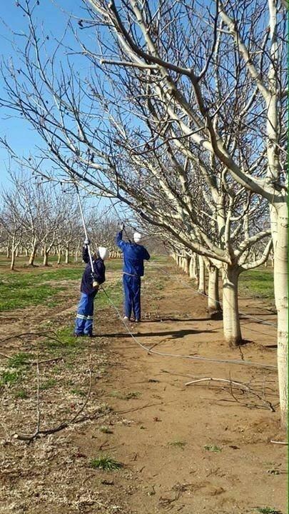 Сады грецкого ореха на юге Африки