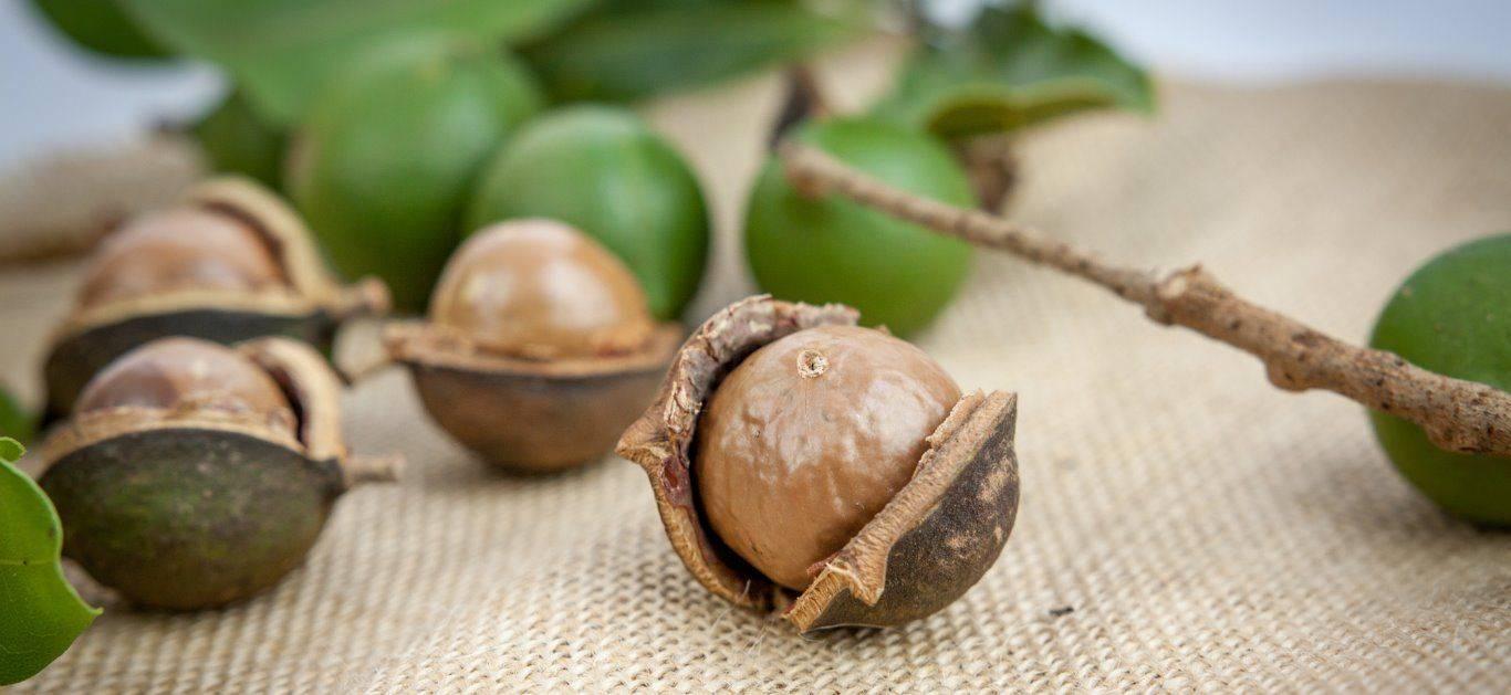 Необычный орех кукуи — чем он полезен для организма и в каких сферах его применяют