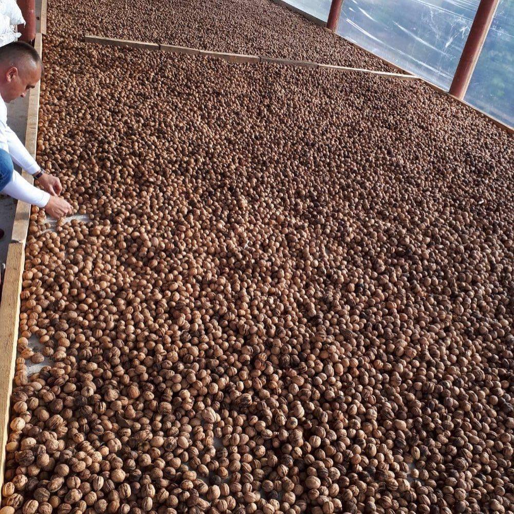 Выращивание лещины: посадка и уход за фундуком (орешник) | огородники