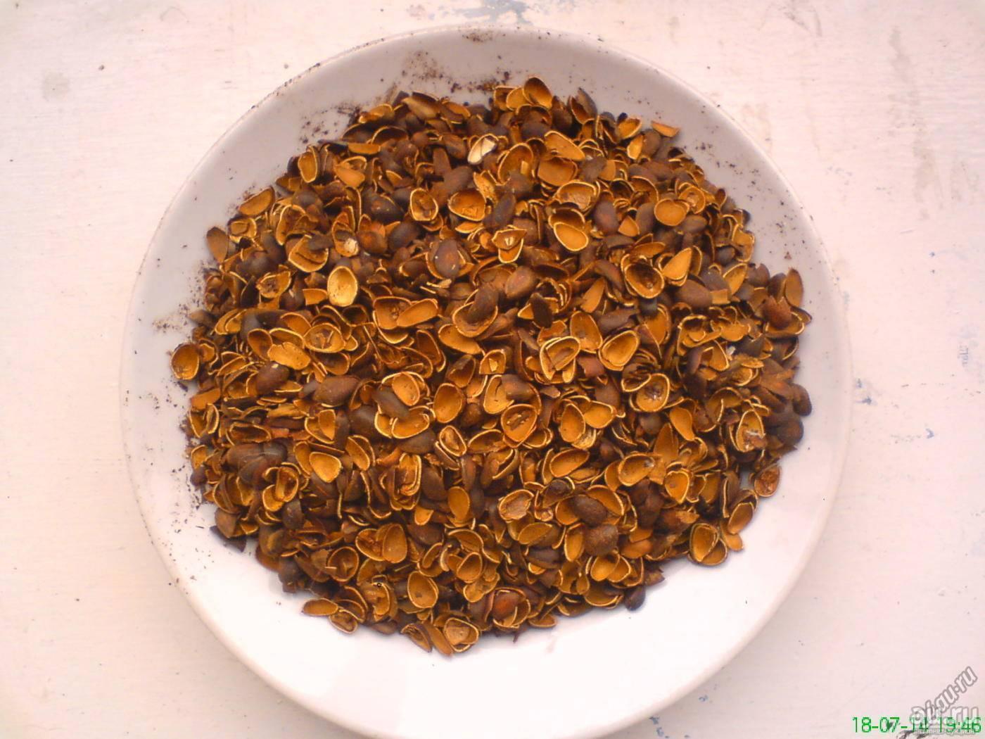 Как используется скорлупа кедровых орехов для удаления волос — рецепты применения