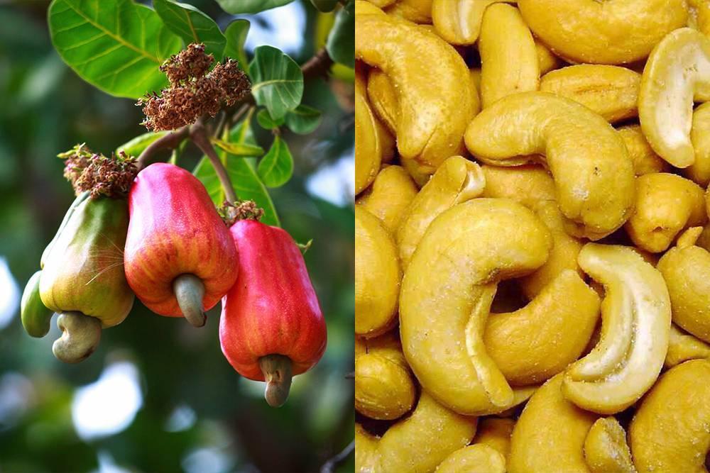 Сколько орехов можно есть в день – кешью и грецких?