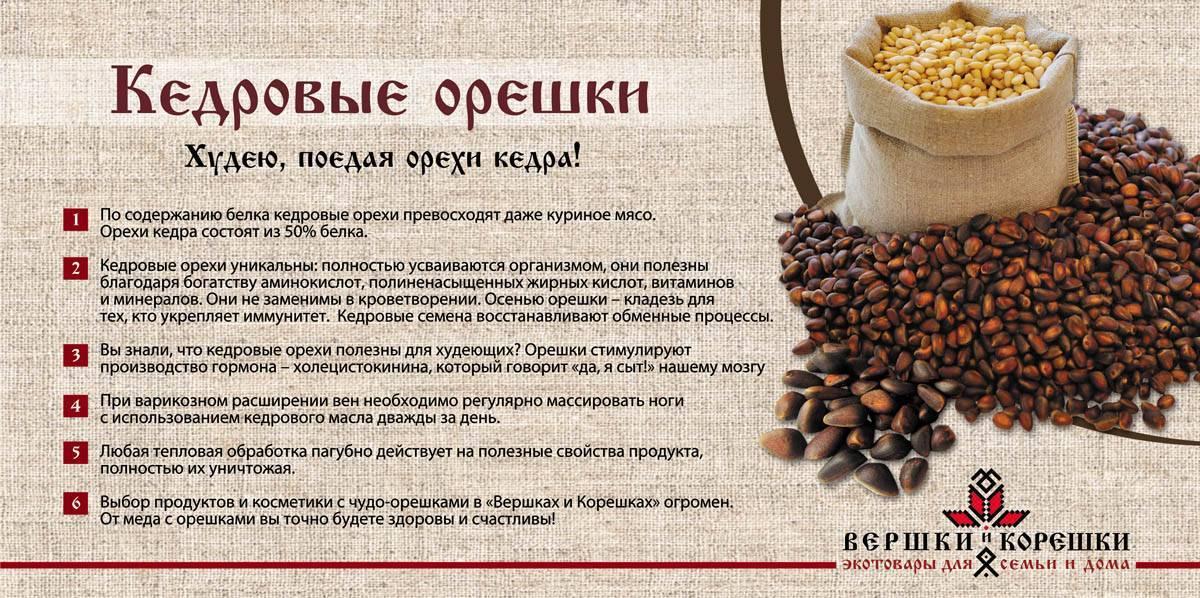 Кедровые орехи: польза и вред, показания и противопоказания