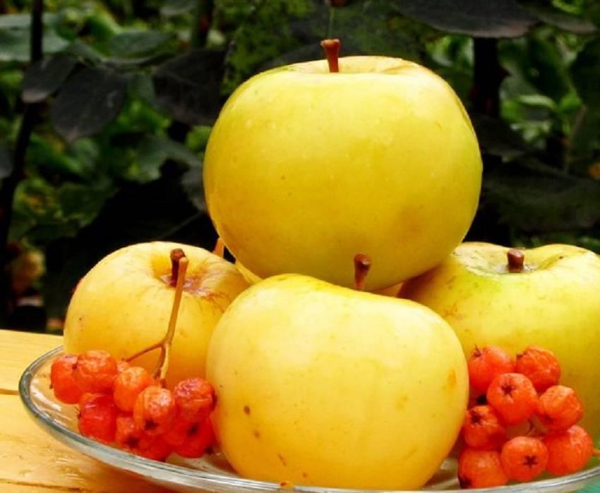 Моченые яблоки: рецепты в домашних условиях в банках на зиму с фото и видео
