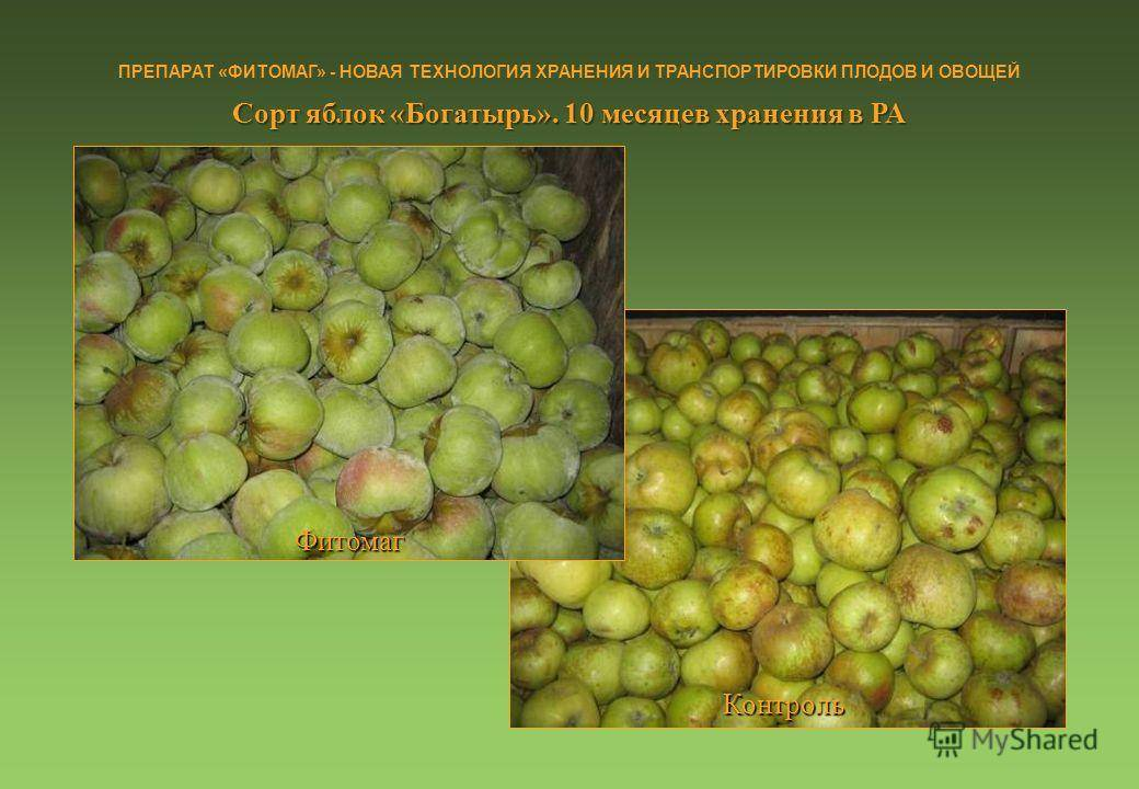 Режимы и сроки хранения плодоовощной продукции