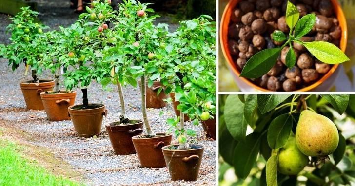Как прорастить грецкий орех в домашних условиях для посадки: как правильно осуществить проращивание семян, можно ли обойтись без стратификации, когда ждать всходы?