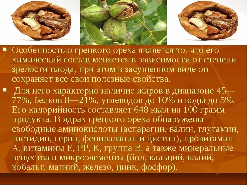 Орех кола. состав, полезные свойства и применение ореха кола - вмоменте