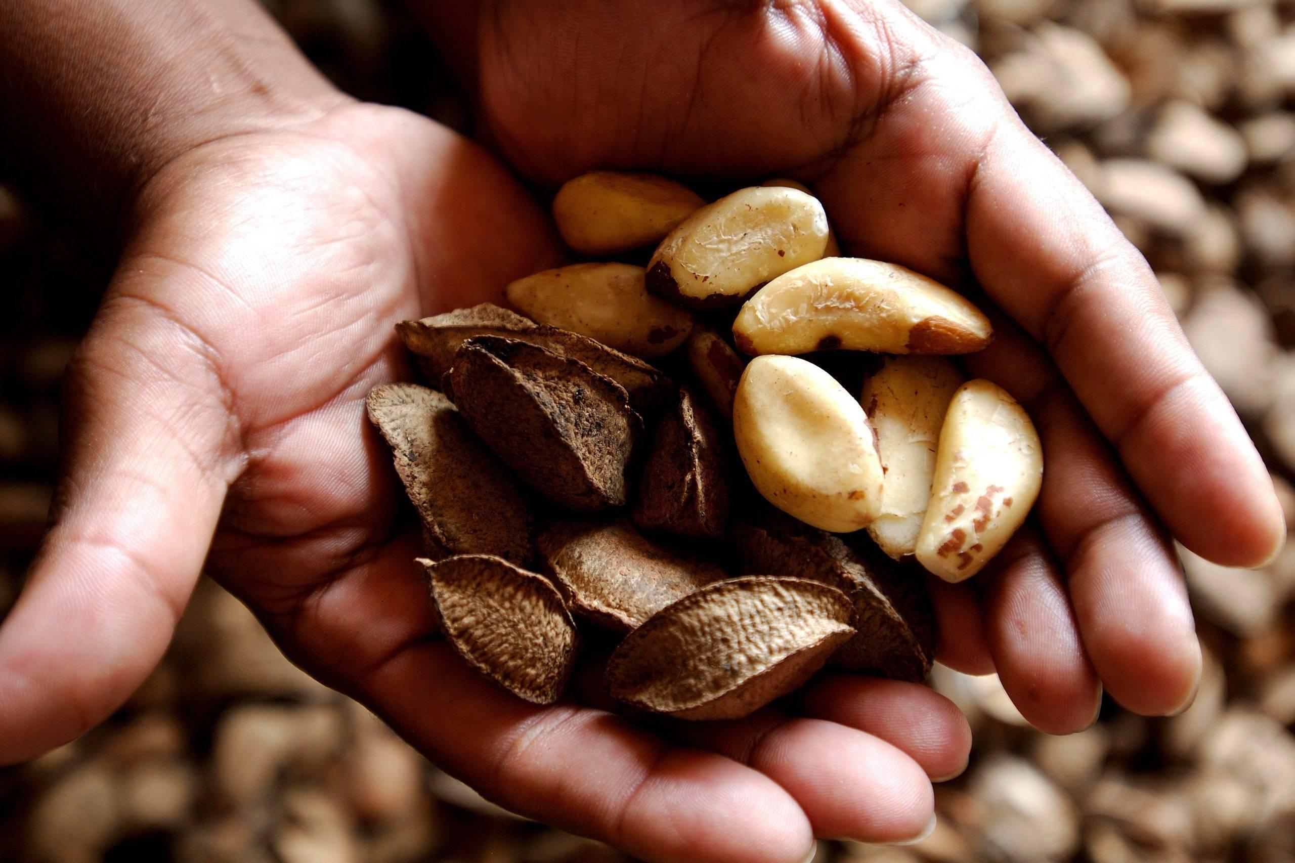Бразильский орех: противопоказания, польза и вред