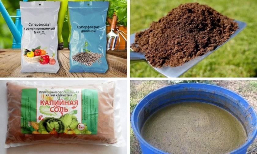 Как посадить грецкий орех - семенами или саженцем?