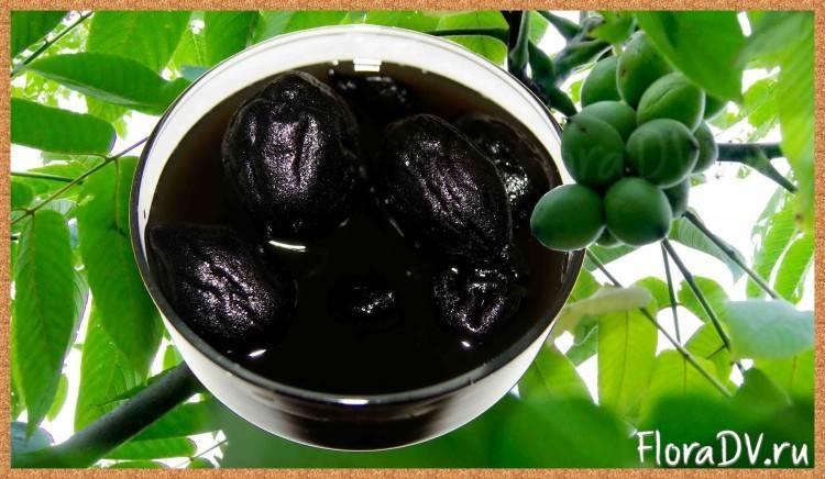 Маньчжурский орех – польза и вред, влияние на организм
