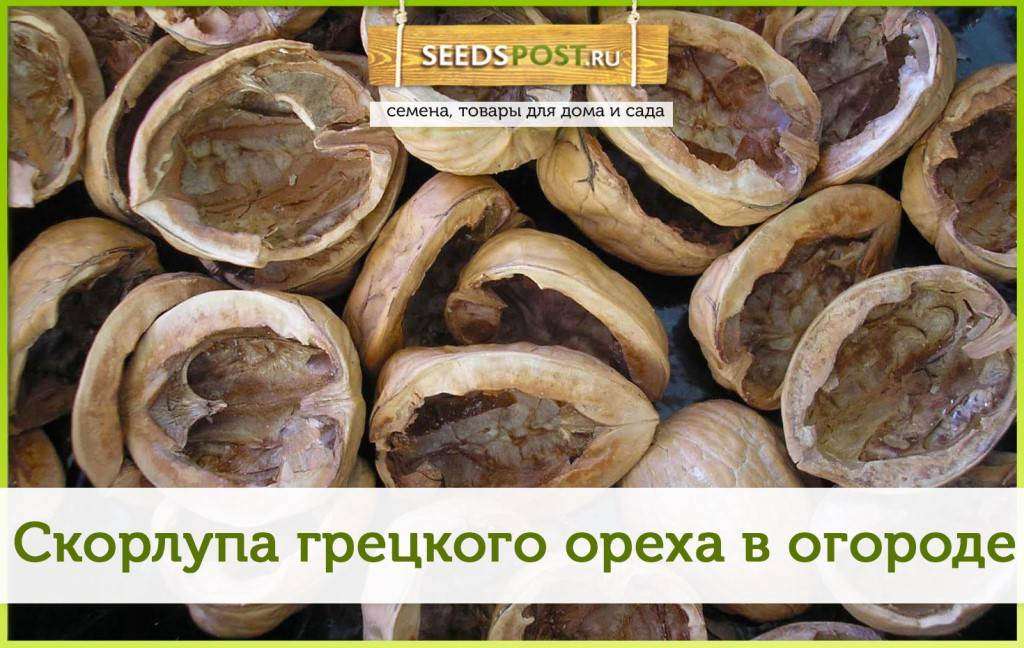 Можно ли использовать листья ореха, как мульчу? / асиенда.ру
