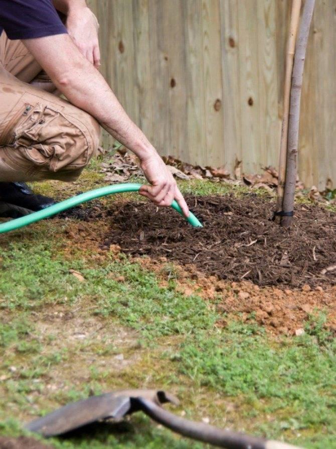 Саженцы грецкого ореха: уход, выбор лучших отростков, время, а также как правильно сделать посадку весной, осенью, когда нужно такое выращивание, как ухаживать?