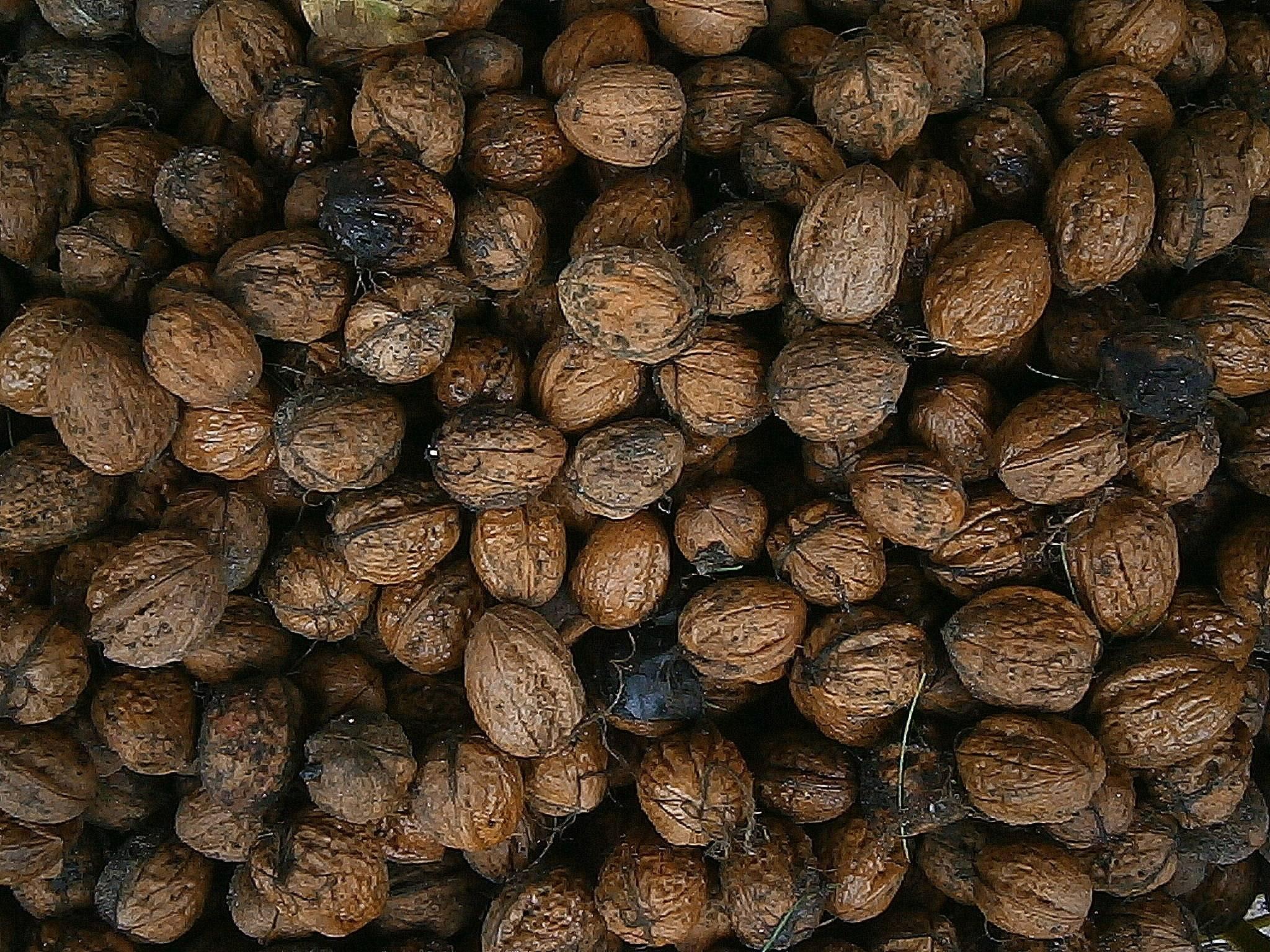 Родина грецких орехов: откуда привезены, происхождение, интересные факты