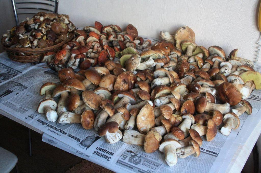 Как сушить белые грибы в домашних условиях в духовке на зиму правильно