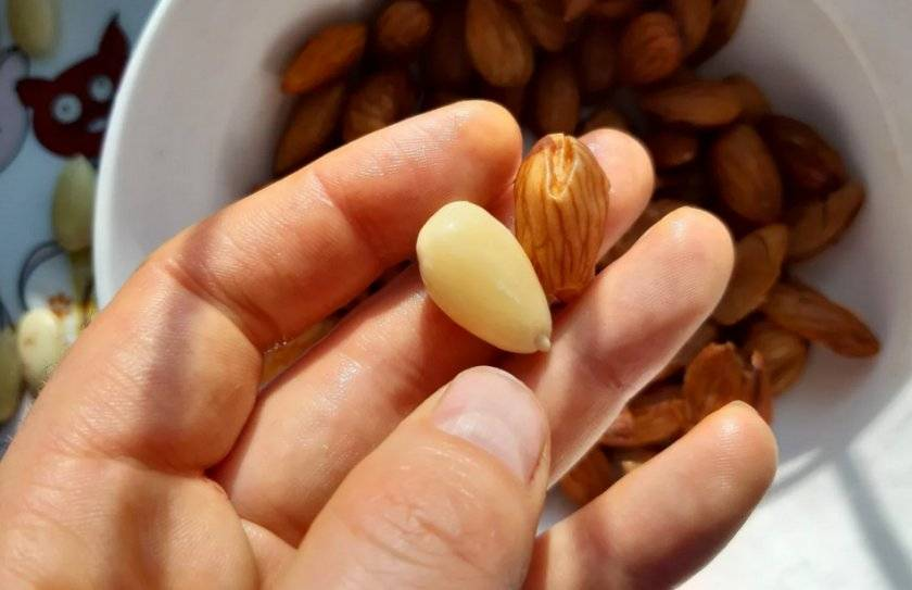 Как хранить очищенные грецкие орехи: правильное хранение в домашних условиях, как почистить | domovoda.club