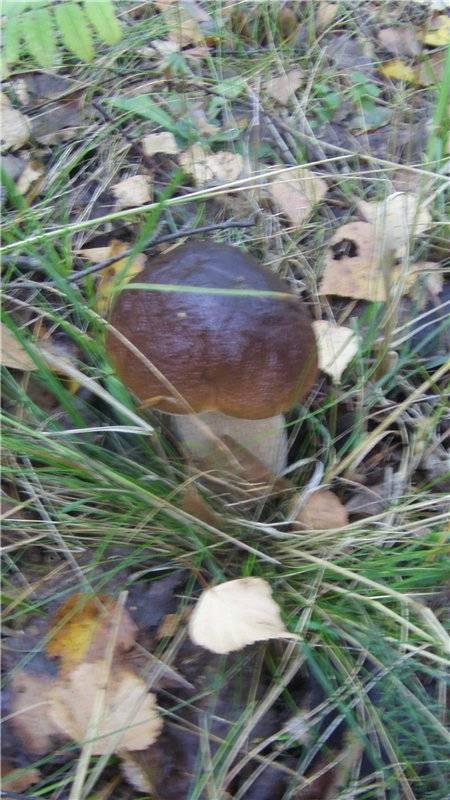 Засолка грибов маслят на зиму в банках