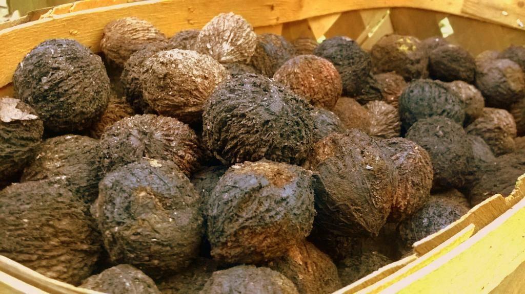 Черный орех — применение, свойства, польза, противопоказания | здоровье и красота