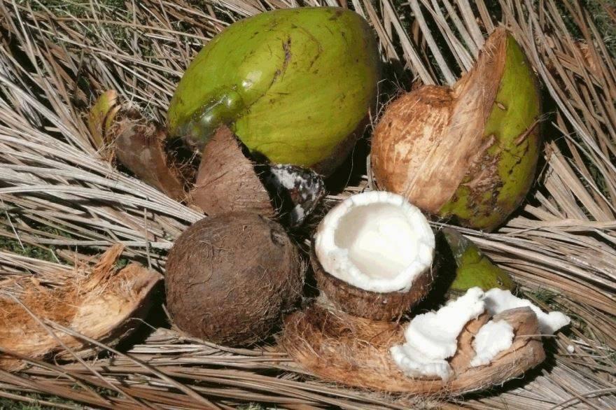 Всё о кокосе | хлебная крошка