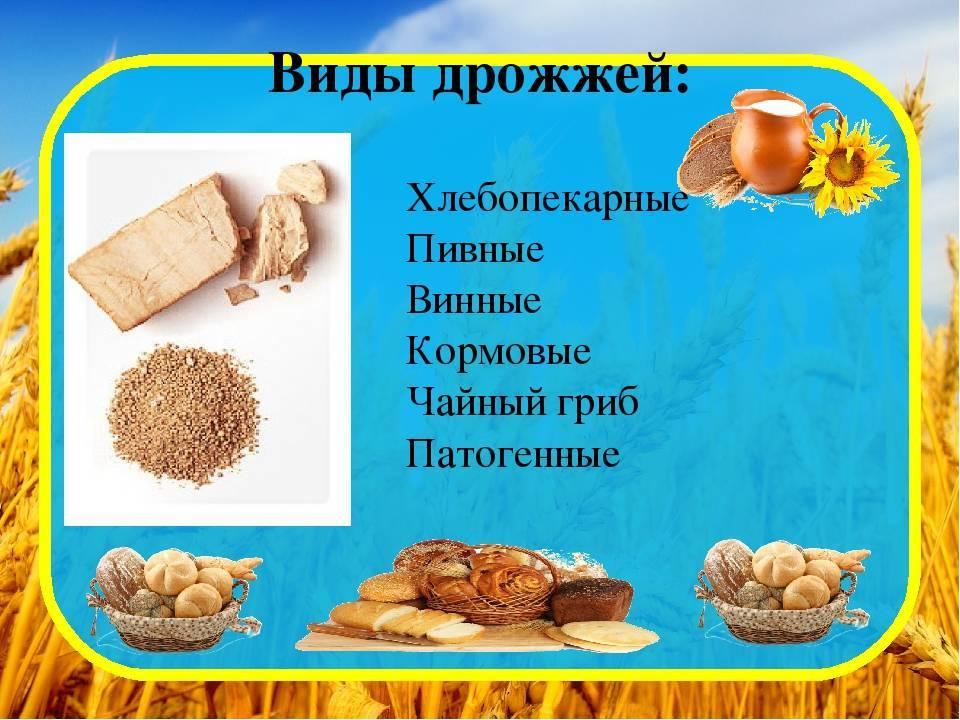 Дрожжи прессованные содержание полезных веществ, польза и вред, свойства