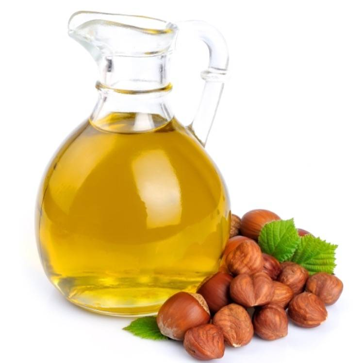 Лесной орех (фундук): польза и вред, применение, лечебные свойства