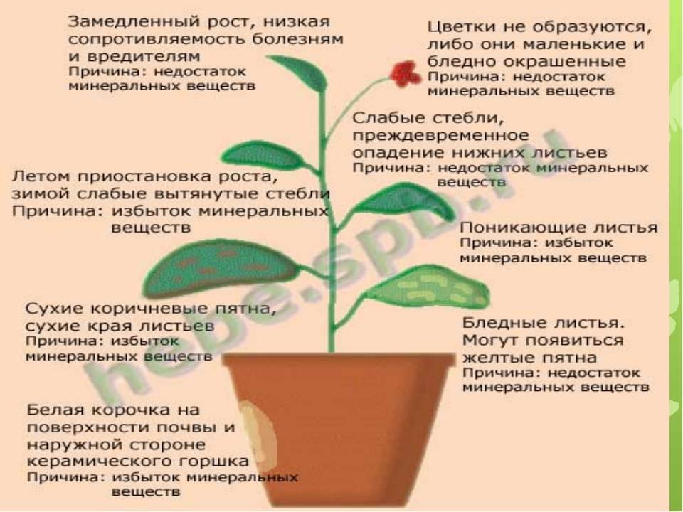 Миндаль: посадка и уход, фото, выращивание, обрезка, прививка, виды и сорта