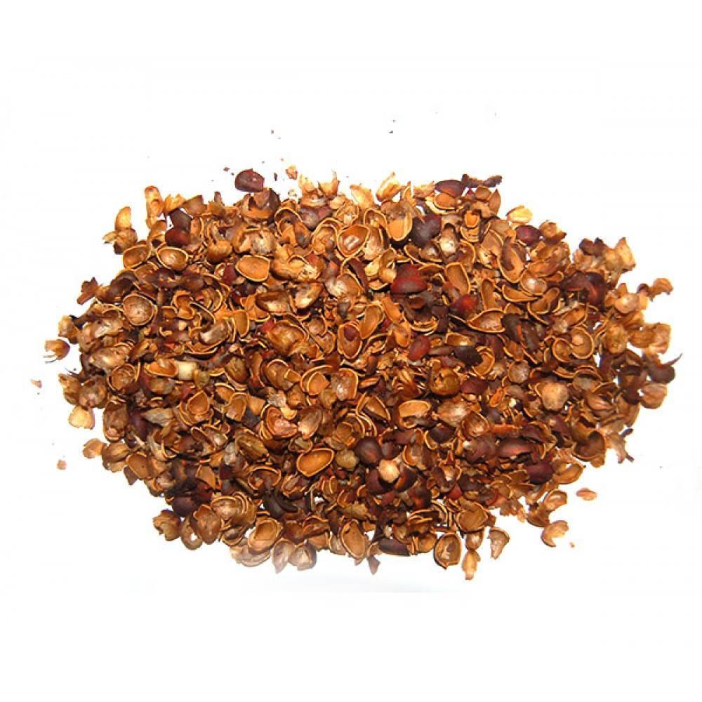 Скорлупа кедрового ореха: лечебные свойства и противопоказания, применение