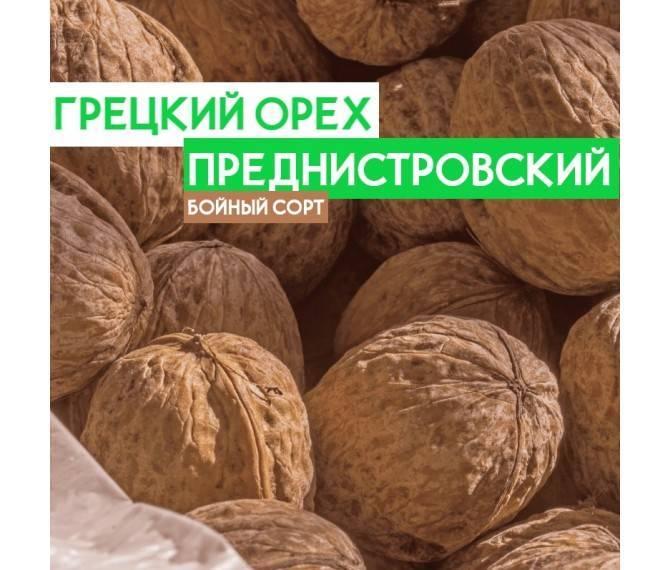 Бизнес на выращивании орехов