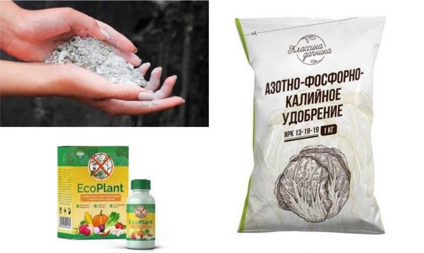 Чем удобрять грецкий орех осенью | мой сад и огород