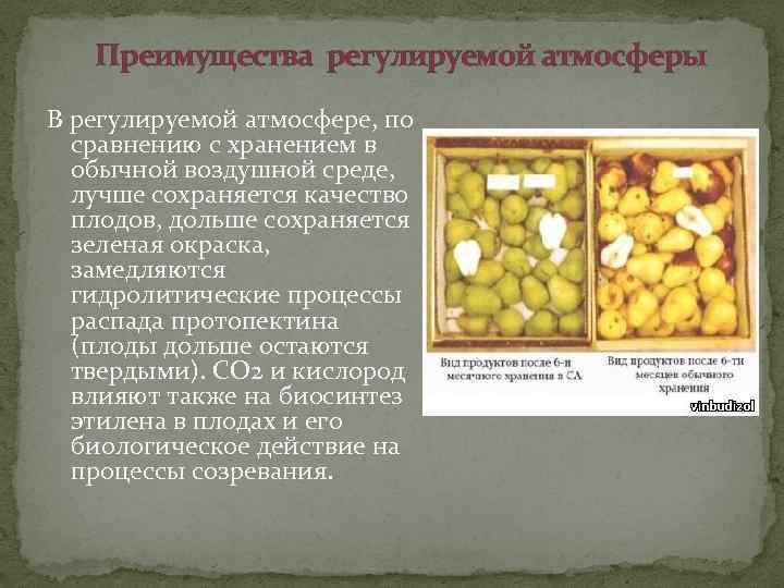 Хранение плодовых овощей. хранение и переработка овощей