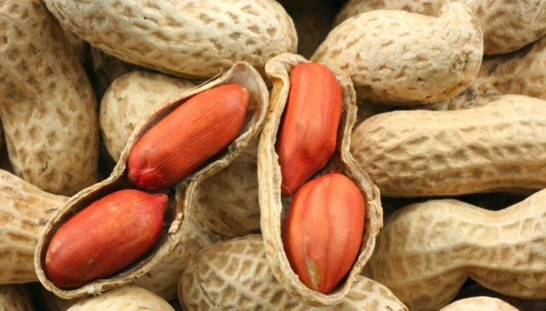 Описание земляного ореха (арахиса) и его полезные свойства