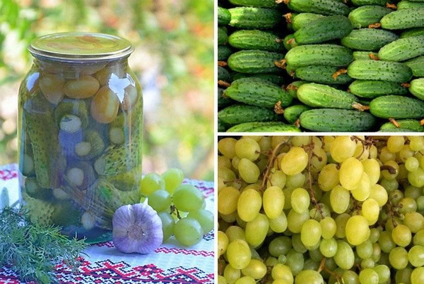 Что дают листья винограда при засолке огурцов. оригинальный рецепт маринованных огурцов - видео
