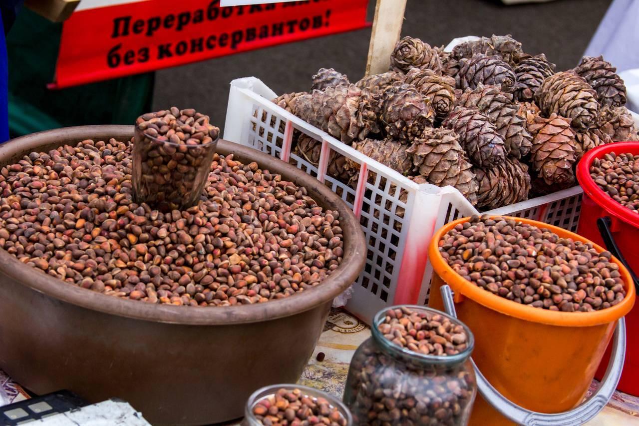 Когда собирают кедровые орехи, время их созревания, особенность заготовок, способы хранения