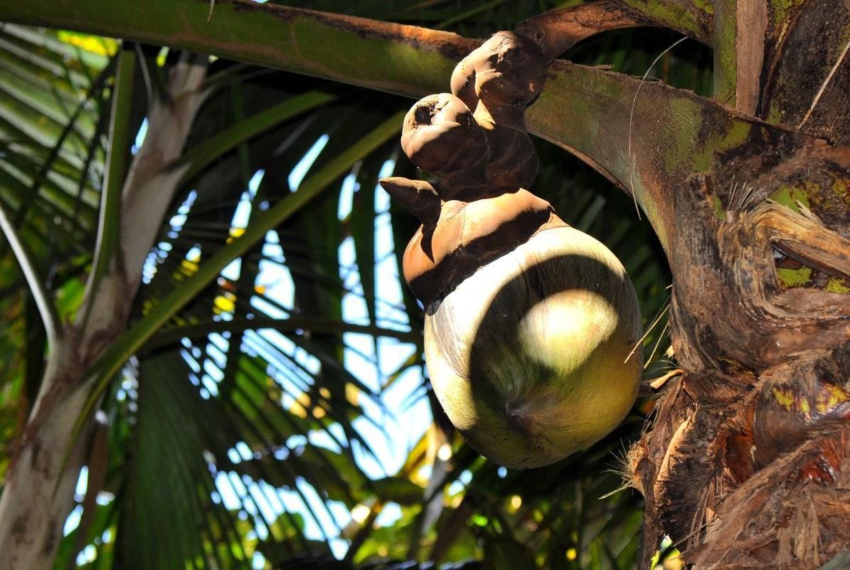 Чем полезен кокос для организма человека? - семейная клиника опора г. екатеринбург