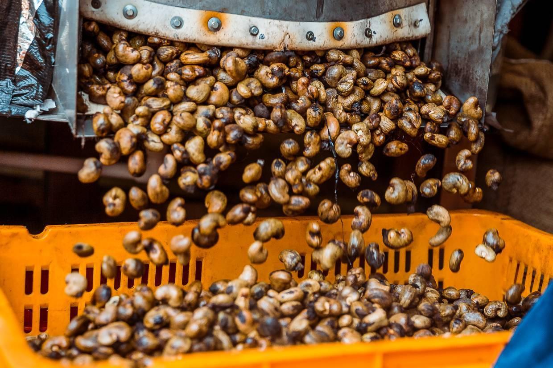 Как чистят кедровые орехи в промышленных масштабах: полный технологический процесс
