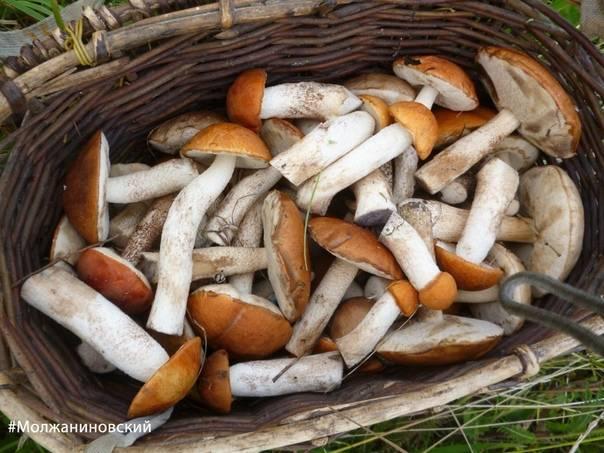 Соление грибов горячим способом в банках. засолка грибов в домашних условиях