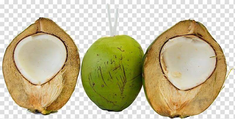 Зеленый и коричневый кокос: в чем разница? интересные мифы и факты о кокосах