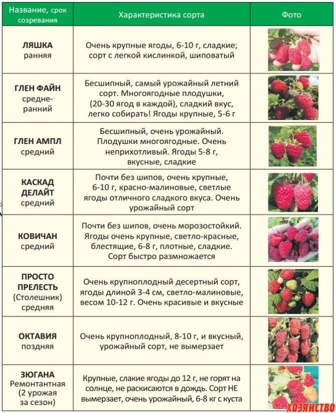 Чем хорош грецкий орех «трофей»: отличительные характеристики и описание сорта