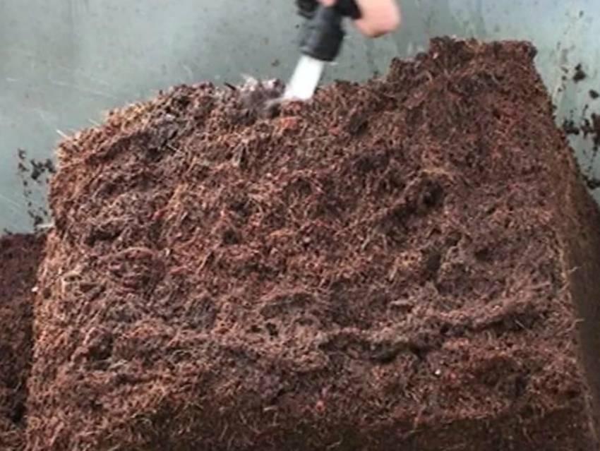 Особенности выращивания рассады с применением кокосового субстрата – все о томатах. выращивание томатов. сорта и рассада.